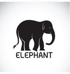 Elephant on white background wild animal vector