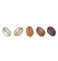 Different coffee beans row vector