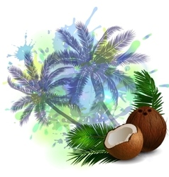 Coconut tropical nut fruit vector image
