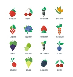 Berries icons set vector
