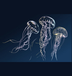 hand drawn jellyfish sea vector image vector image