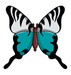 Papilio palinurus butterfly icon cartoon style vector