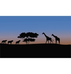 Silhouette of giraffe and puma vector image vector image