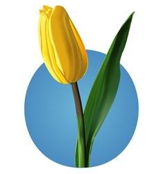 Yellow tulip mesh vector image vector image