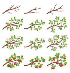 Apple tree branches vector image