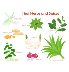 thai herbs and spices seasoning vector image vector image