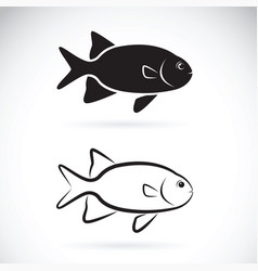 Two fish on white background aquatic animals vector