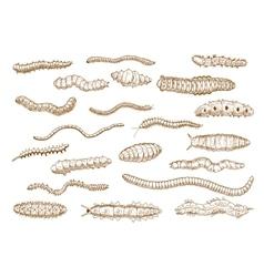 Caterpillars larvae worms slugs centipedes vector image