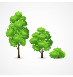 a set of different trees vector image vector image