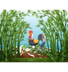 A rooster in the bamboo forest vector image vector image