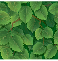 Seamless pattern with green spring leaves of birch vector image vector image
