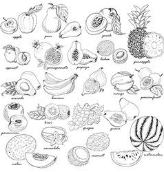 Collection of fruit in sketch style vector