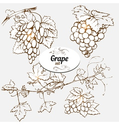 Grape set vector image vector image