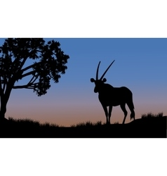 Single antelope of silhouette in park vector