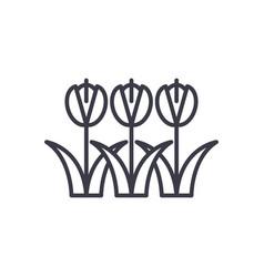 tulips symbol concept thin line icon vector image vector image