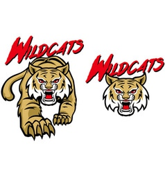 Wildcats mascot vector