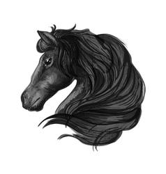 Black stallion horse head sketch vector image