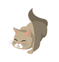 cat animal pet adorable shadow vector image