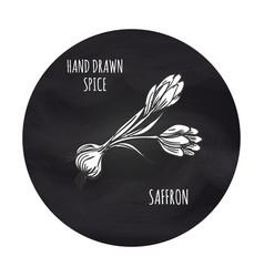 spice saffron in blackboard round vector image