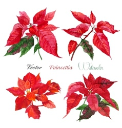 Set of poinsettia flowers vector