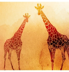 Vintage of watercolor giraffes on the old p vector