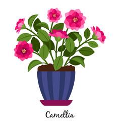 Camellia plant in pot vector