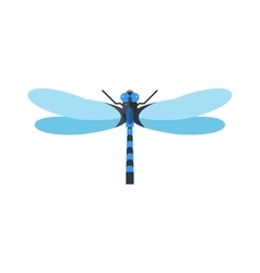 Dragonfly anax imperator male blue emperor with vector