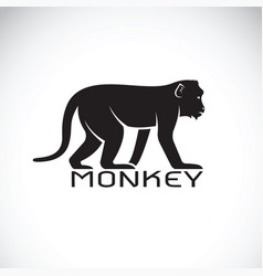 Monkey on white background wild animal vector