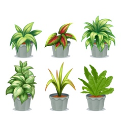 Green leafy plants vector