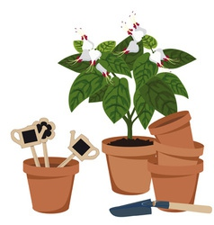 room flower and flower pots vector image