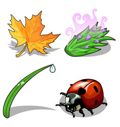 Ladybug and plants on a white background vector