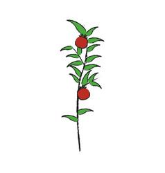 Tomatoes plant icon vector