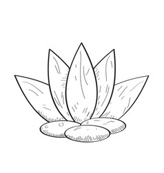 Isolated spa icon vector