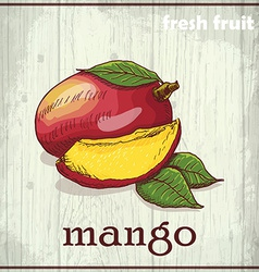 Hand drawing of mango fresh fruit sketch vector