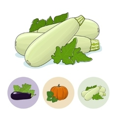 Icons zucchini pumpkin eggplant vector