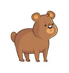 cute bear wildlife image vector image