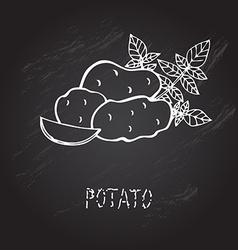 Hand drawn potatoes vector
