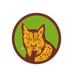 Iberian lynx head front vector