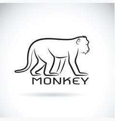 monkey on white background wild animal vector image vector image