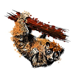 Colored hand drawing a sunda slow loris vector
