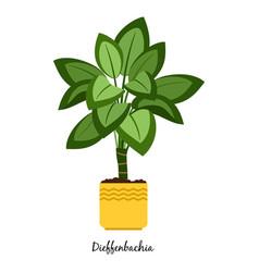 Dieffenbachia plant in pot vector