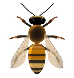 Golden bee vector