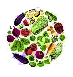 circle of vegetables watercolor set vector image