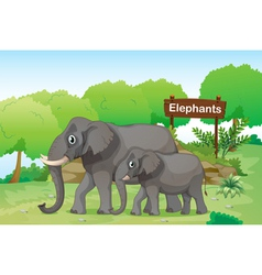 Elephants with a wooden signage at the back vector