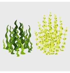 Two varieties yellow and green plants vector