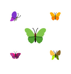 Flat moth set of butterfly summer insect vector
