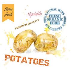 Potatoes watercolor banner vector image