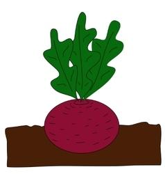 Planting beet vector image vector image