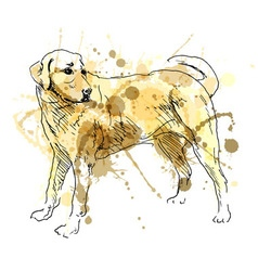 Colored hand drawing labrador vector