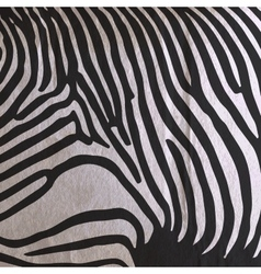 abstract old paper background with animal zebra vector image vector image